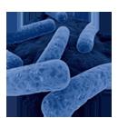 C. difficile Infection Management